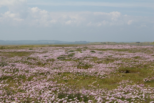 Wildflowers at Holy Island.