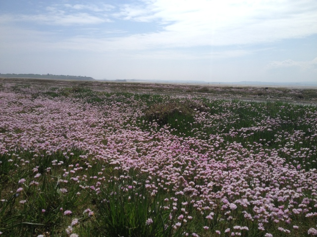 Stretches of wildflowers along the causeway at Holy Island.