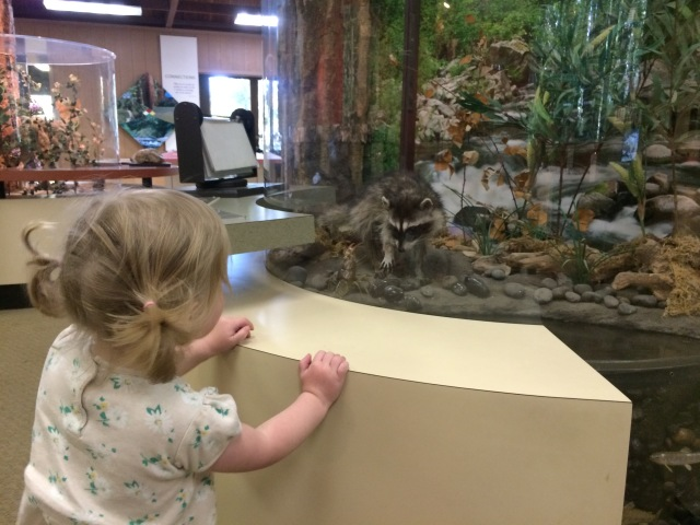 Olive in the visitor centre